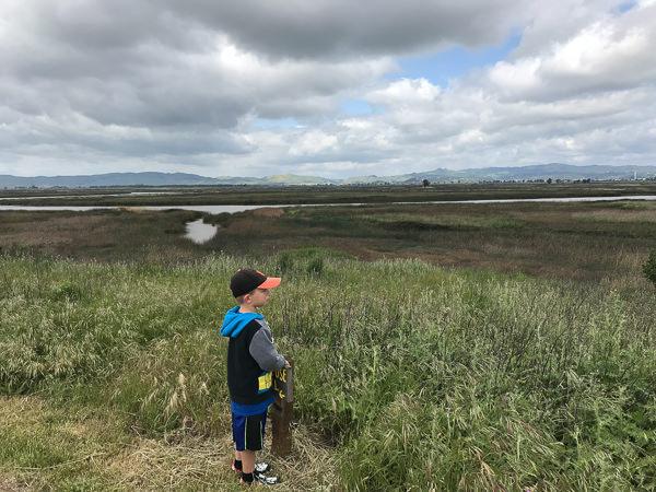 Boy staring at wetlands during summer vacation.