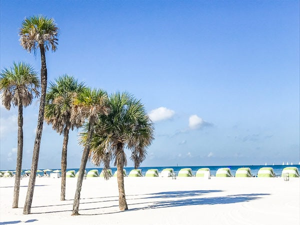 Palm trees and sugar sand at Clearwater Beach.