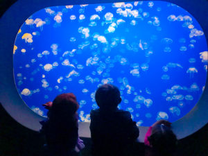 Three kids staring at the jelly fish at Monterey Bay Aquarium.