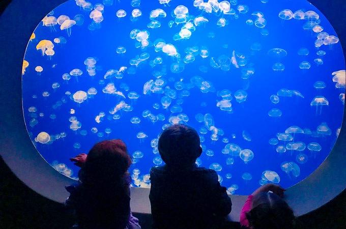 Three kids staring at the jelly fish at Monterey Bay Aquarium.