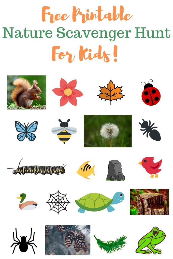 A printable scavenger hunt featuring 20 clip art images of plants, animals, and insects.