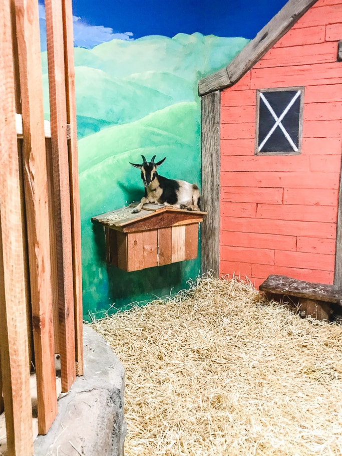 A goat hanging out on top of a house shaped box.