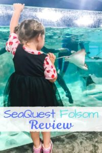 A little girl watching the sting rays through glass.