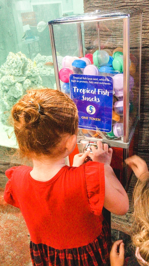 A girl buying fish food with a token at SeaQuest Folsom.