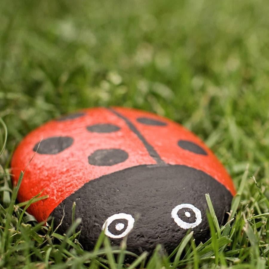 A kindness rock painted to look like a ladybug and set inside some grass.