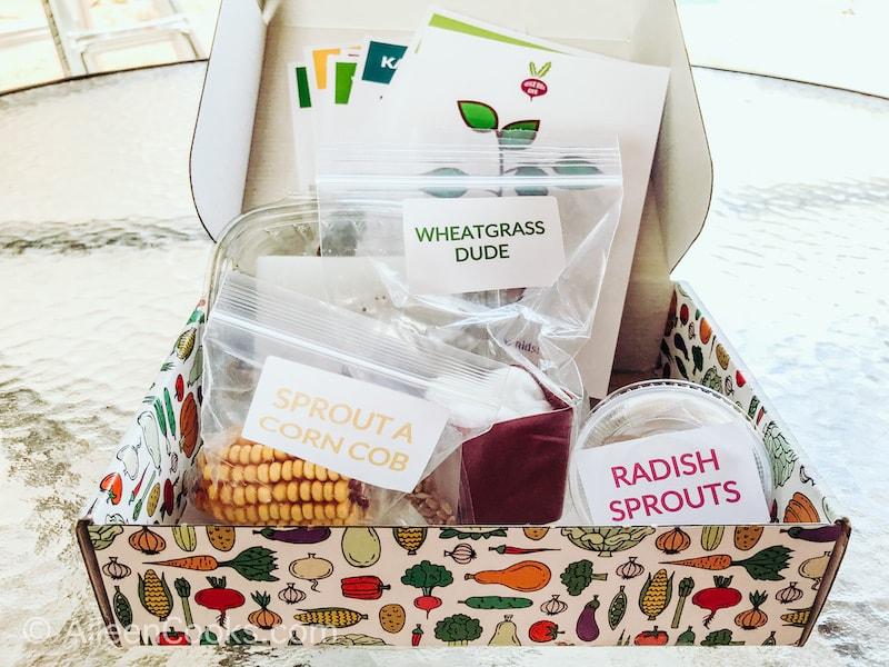 Inside of the Veggie Buds Club Grow Kit.