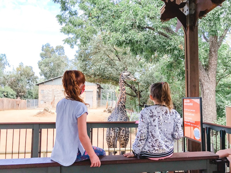Two girls sitting on a ledge, watching a giraffe at the Sacramento Zoo.