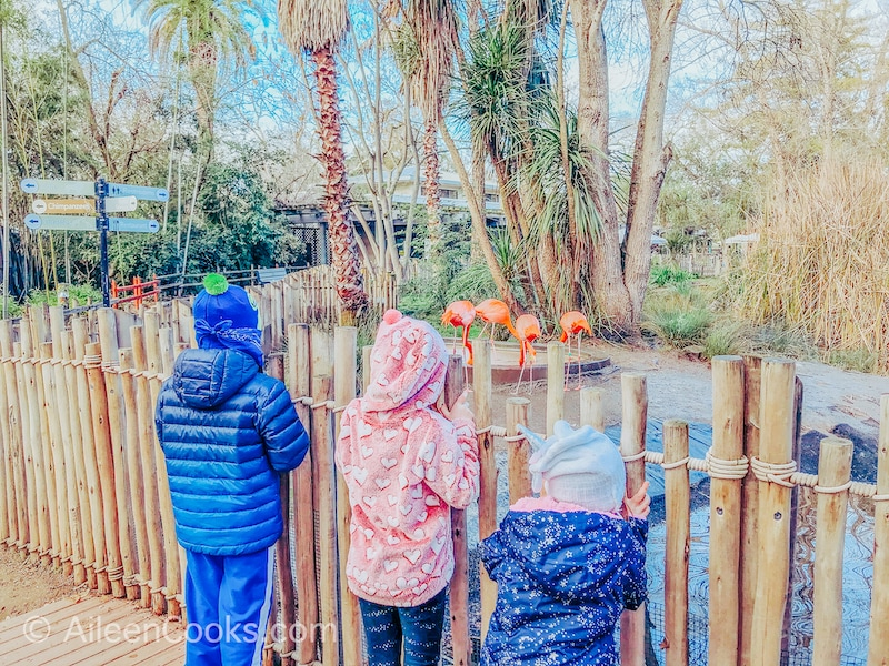 Three kids with their back to the camera, looking at flamingos behind a fence.