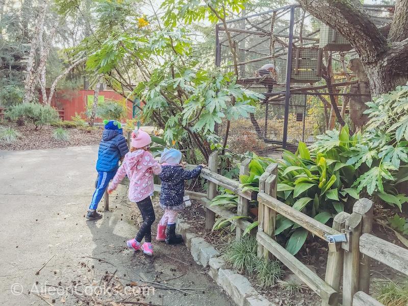 Three kids looking at birds at the Sacramento Zoo.