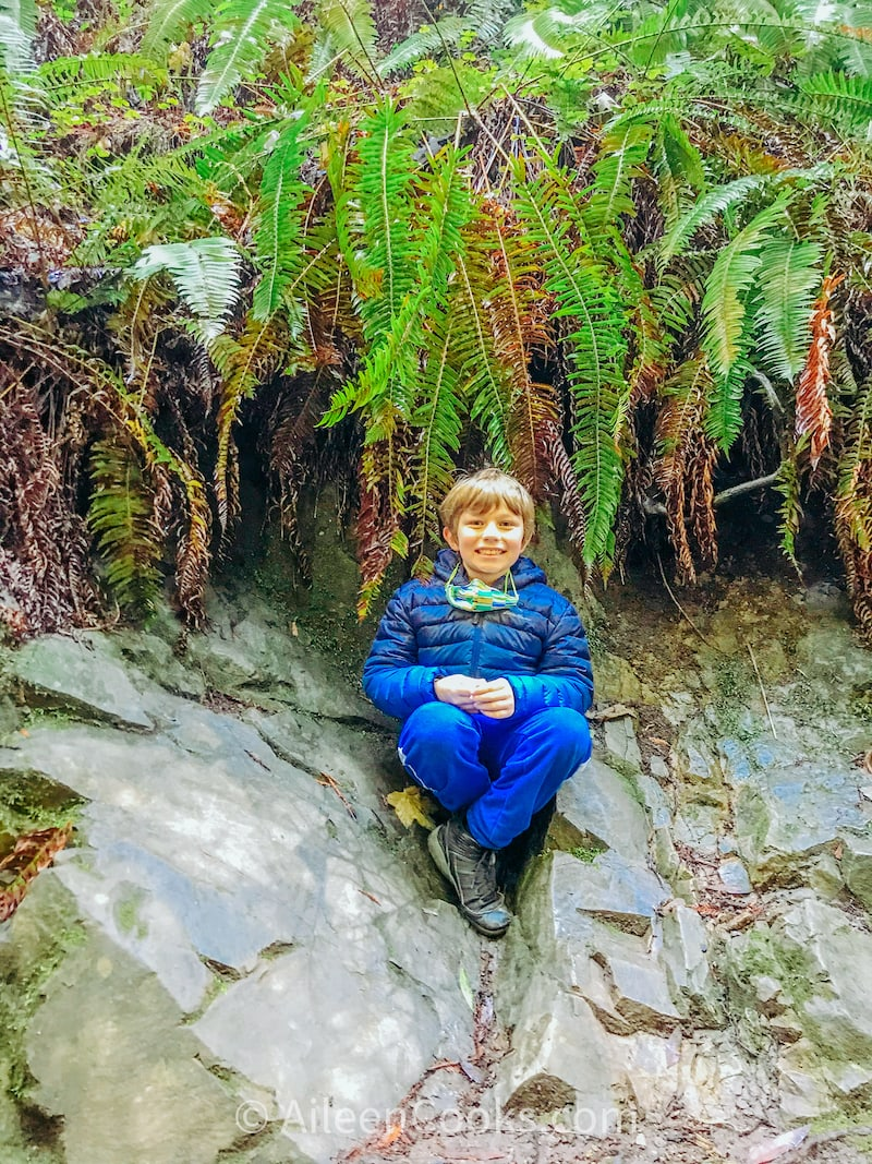 A boy sitting on a rock inside the Muir Woods National Monument.