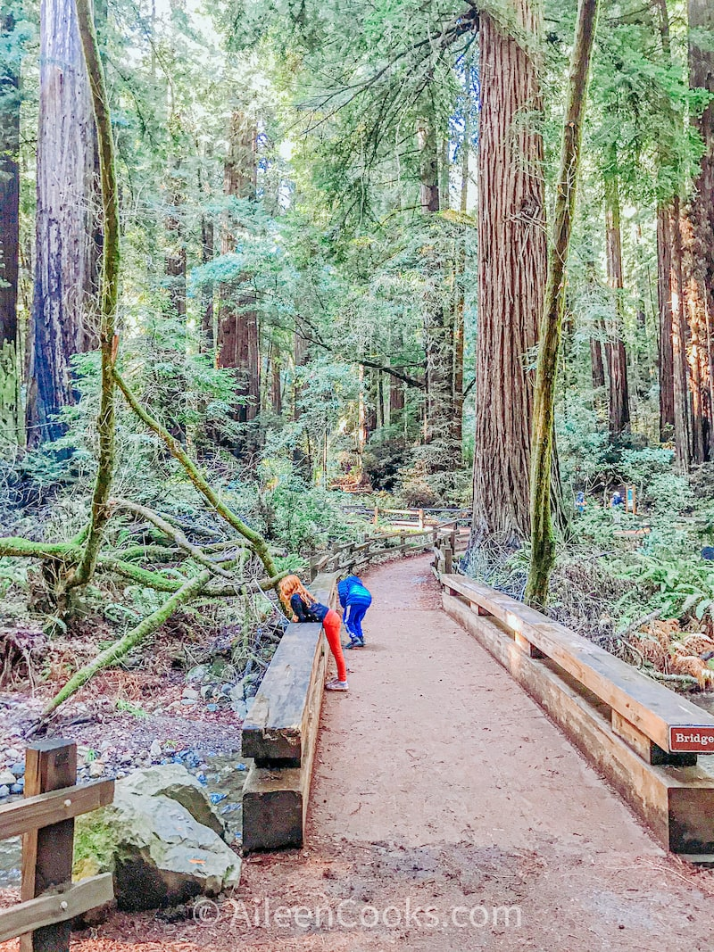 Two kids looking over the side of a bridge at a creek inside a redwood grove.
