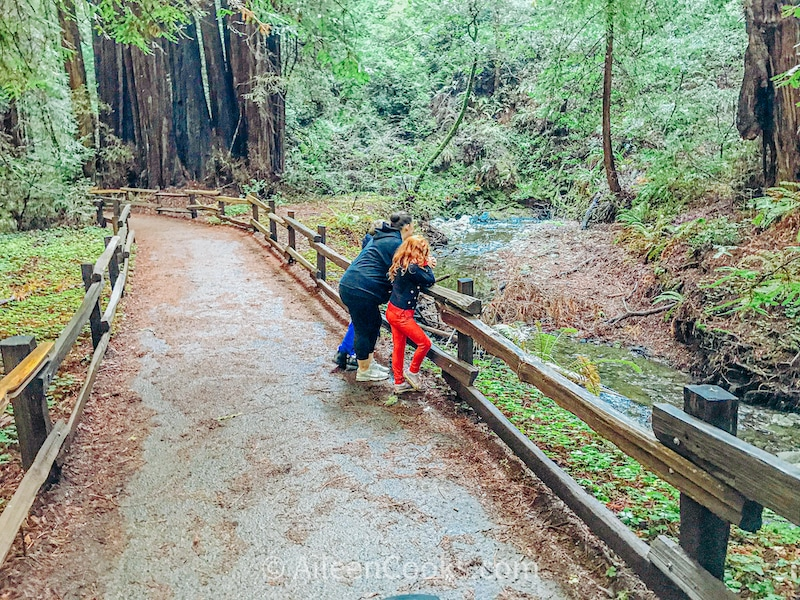 A woman and child leaning against the fence of a trail inside Muir Woods.