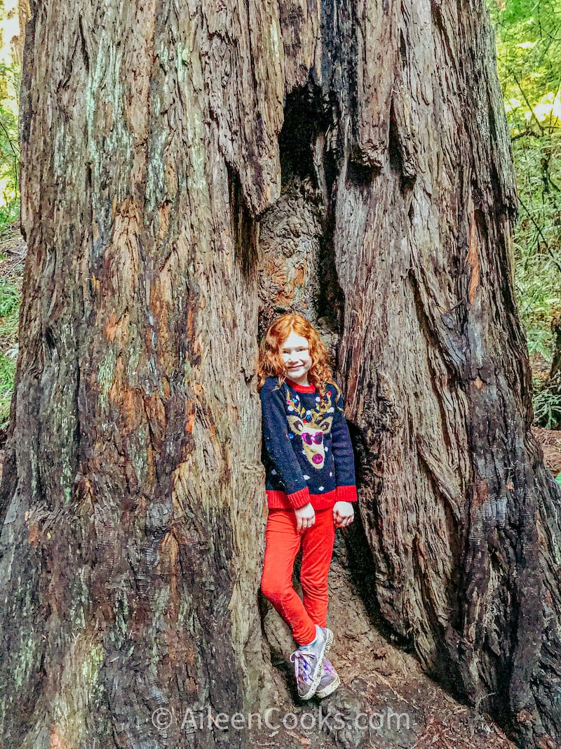 A girl standing inside the opening of a redwood tree at Muir Woods National Monument.